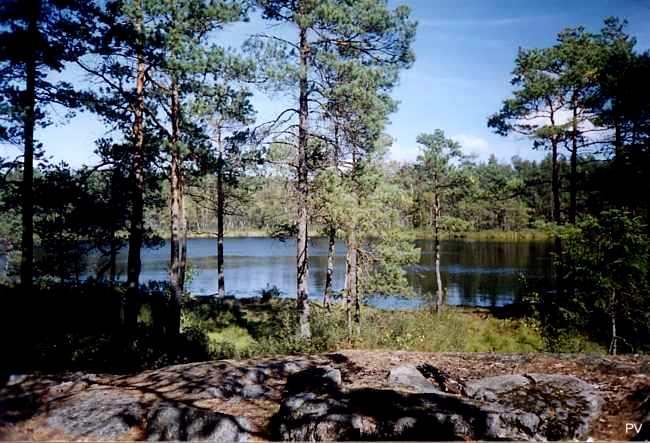 Tornbergssjöns södra strand. Om du vill de flera foton från området, klicka på bilden.